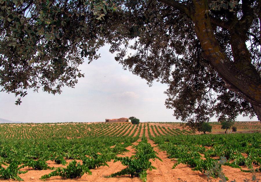 Suelos unicos para los vinos de do almansa